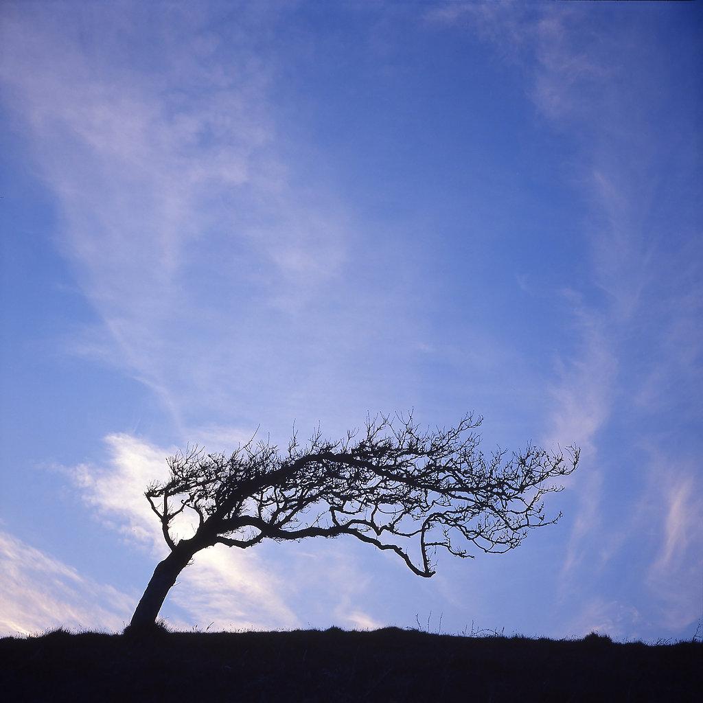 Mell fell tree
